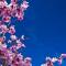 Spring Equinox Angel Course With Archangel Metatron