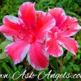 Angelic Answers- Weekly Column!