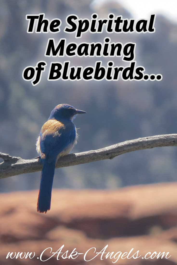The spiritual meaning of bluebird bluebird meaning biocorpaavc Choice Image