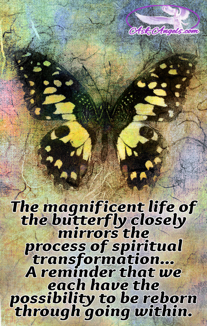 The magnificent life of the butterfly closely mirrors the process of spiritual transformation... A reminder that we each have the ability to be reborn through going within. Learn more about the spiritual meaning of butterflies and what they mean for you. #signs #nature #beautiful