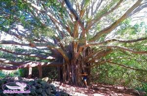 Healing Power of Trees