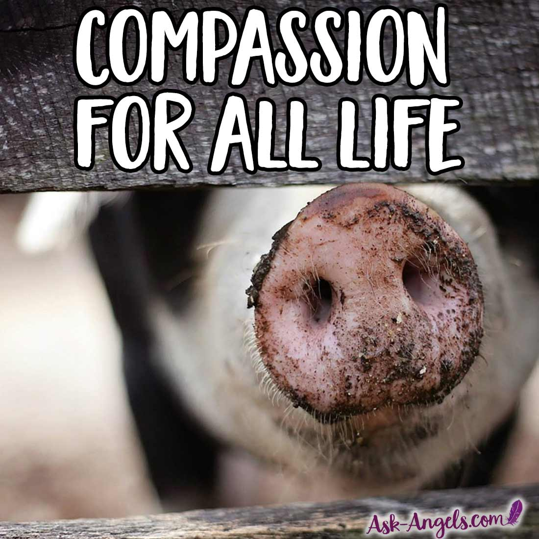 Compassion for All Life