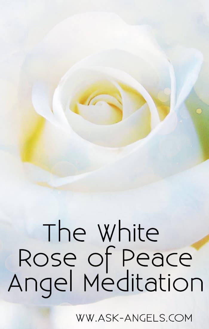 White Rose of Peace Meditation