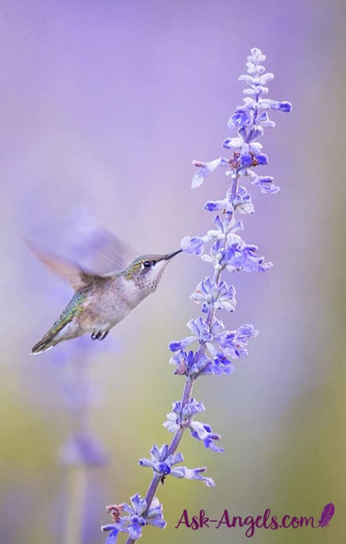 Hummingbird Spiritual Meaning