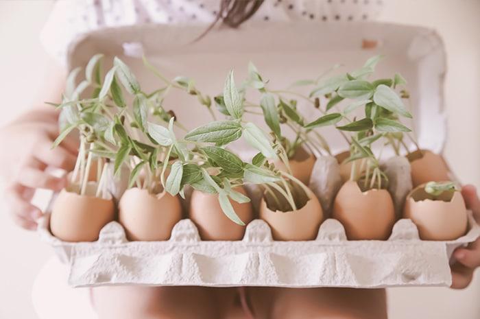 Plant Seeds In Eggshells